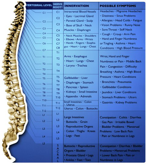 Meehan Chiropractic and Wellness - Chiropractor in Charlotte, NC